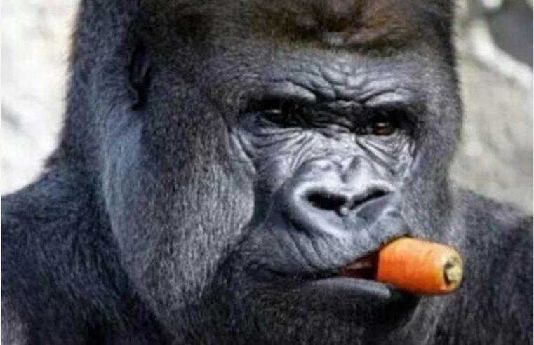 Мајмунска посла у хајдучији