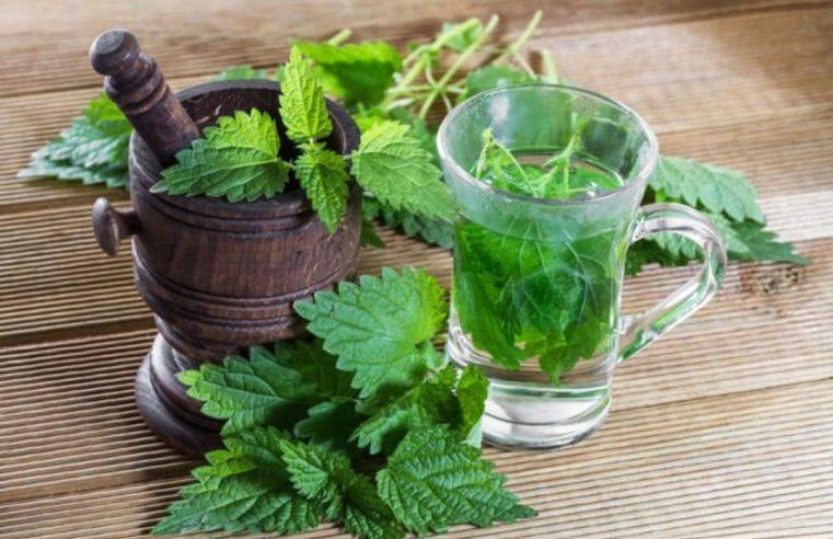 Тамо гдје класична медицина не успијева наћи лијек, узмите сок коприве – РЕЦЕПТИ